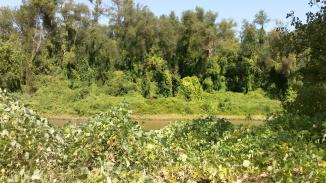 folate river