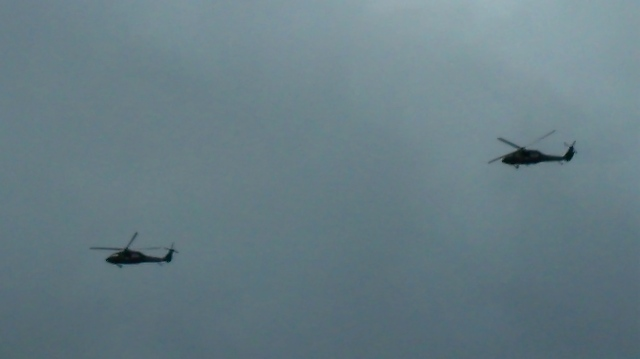 two hawks move in the sky