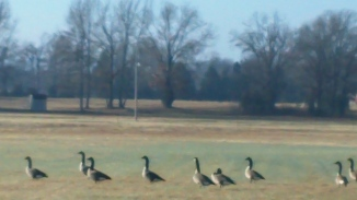some wild geese to chase along the way